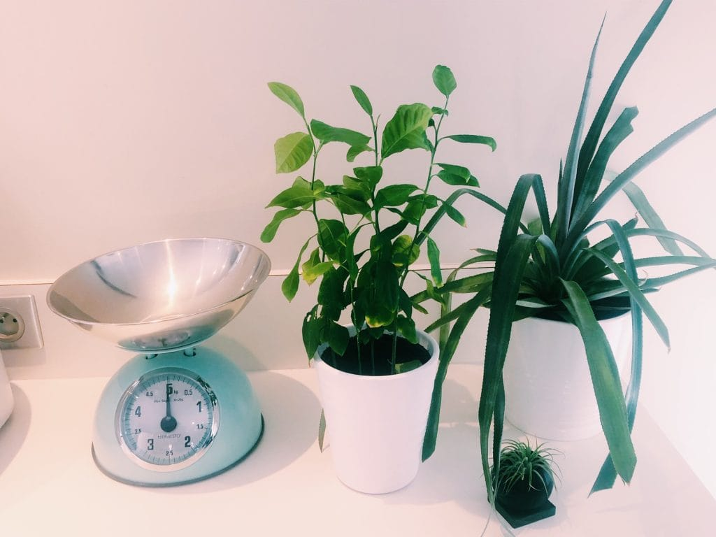 Shake the deco - Coin Green - Plantes vertes - cuisine