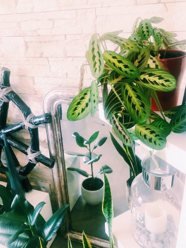Shake the deco - Coin Green - Plantes vertes - salon détail